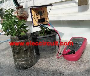 Simple solar plant watering alarm